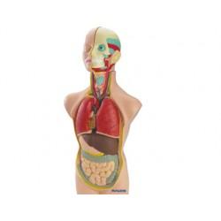 Juego miniland anatomia humana 11 piezas 50 cm