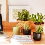 Guía para tener plantas en la oficina y no dañar los muebles